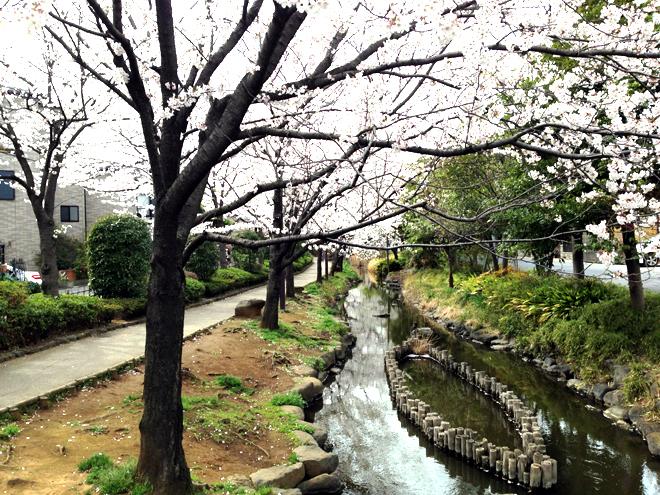 江戸川区親水公園