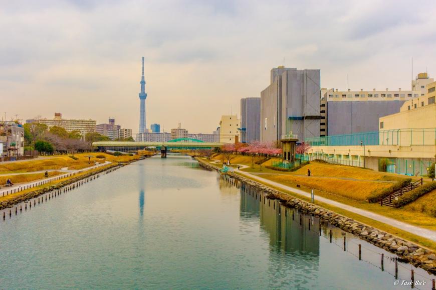 旧中川河川敷