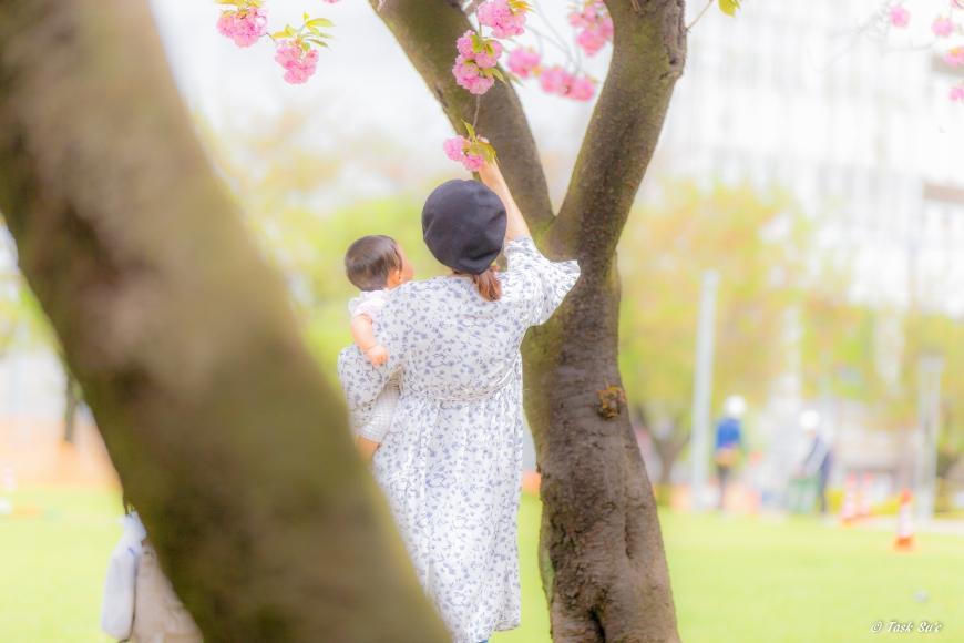 錦糸公園の桜(カンザン)