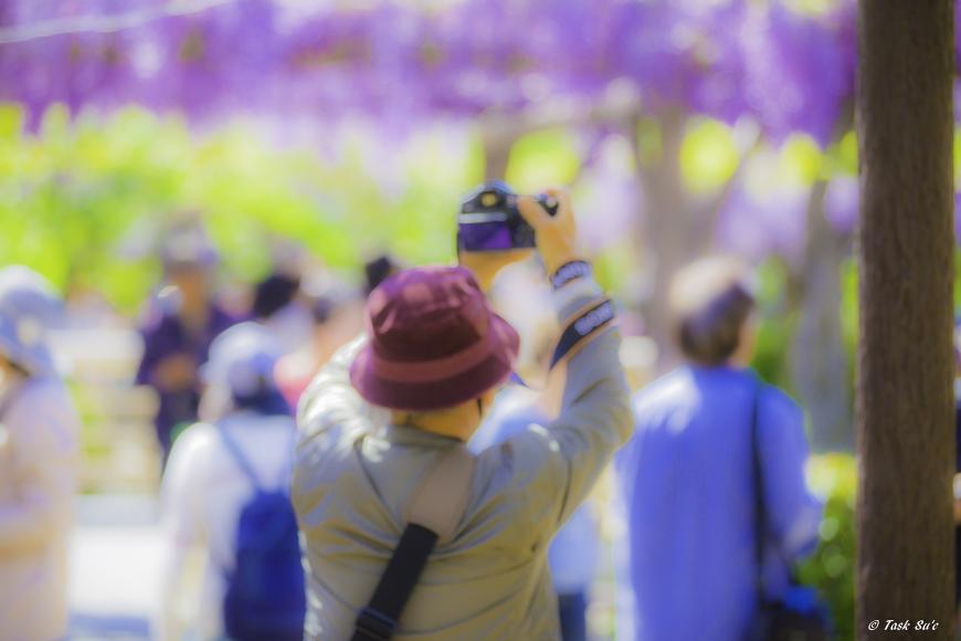 亀戸天神の藤祭り